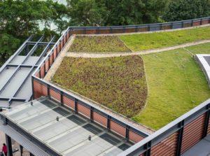 verde, acoperiș de vegetație